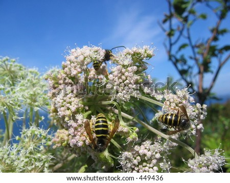Some bees on a flower - stock photo
