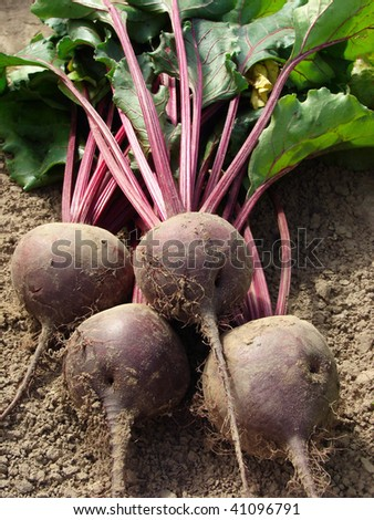 some beetroots with tops on the ground - stock photo