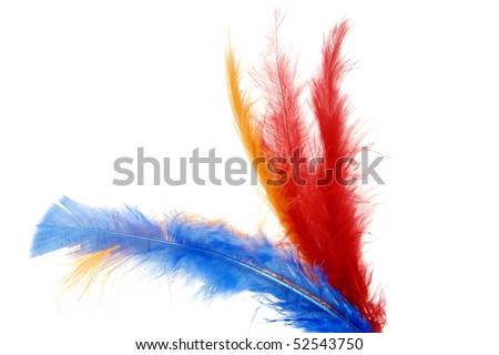 some colored feathers isolated on a white background