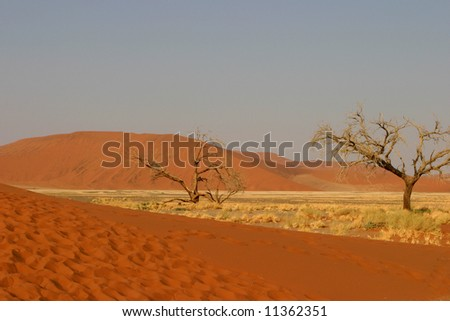 Some dead trees standing in the namibian desert on a plain with dry grass - stock photo