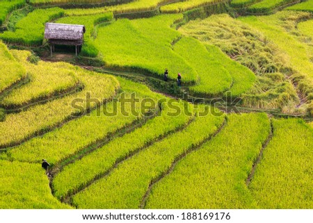 Some farmers walk through guardhouse in terraces field