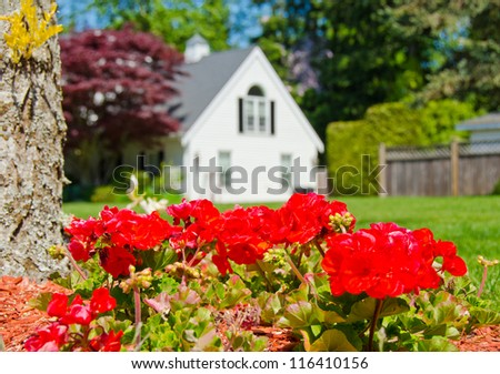 Some flowers on the lawn in  front of the house. Landscape design. - stock photo