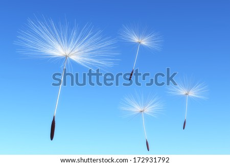 some flying seeds of dandelion are carried by the wind on a blue sky as background - stock photo