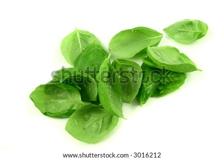 Some fresh basil leaves with dew drops on a white