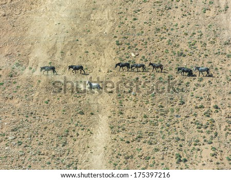 Some horses are on the hill - Argentina - stock photo