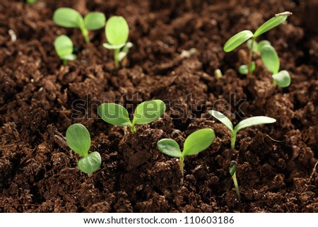 some seedling plants in soil - stock photo