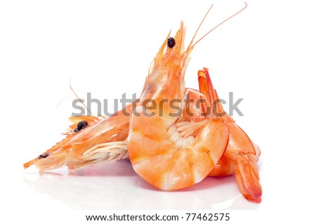 some shrimps on a white background - stock photo
