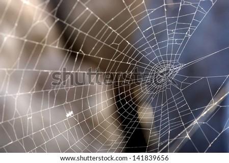 Some Spider Net Back Illuminated Over Some Rocks - stock photo