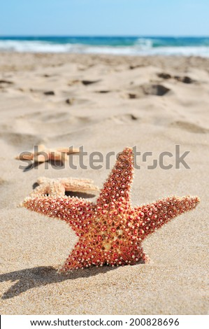 some starfishes on the sand of a beach