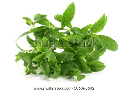 some Stevia stem on a white background - stock photo