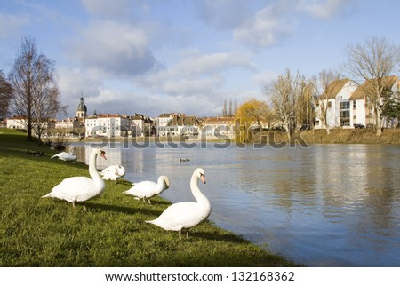 Some swans in Chalon sur Saone, Burgundy, France. - stock photo