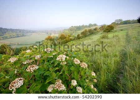 Some white flowers by the side of a footpath in Surrey's  North Downs, UK. Taken on a hazy morning just after sunrise in May. - stock photo