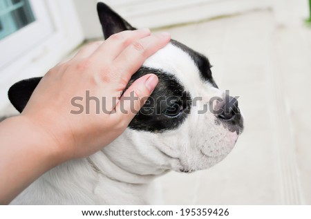 someone are groping a dog - stock photo