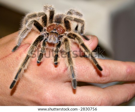 Something wicked crawls this way - spider - stock photo