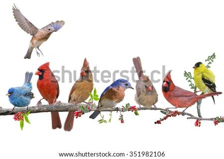 Songbird Celebration - stock photo