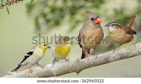 Songbird Quartet - stock photo