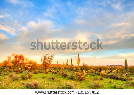 Sonoran Desert at sunset. - stock photo