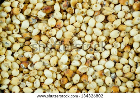 Sorghum rice background .