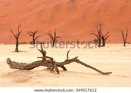 Sossusvlei: dead acacia trees in the Namib Desert, Namibia - stock photo