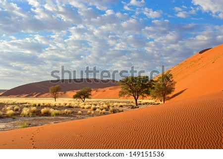 Sossusvlei landscape with Acacia trees and red sand dunes, Namibia, southern Africa - stock photo