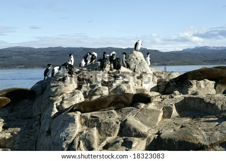 South America. Argentina. Patagonia. Tierra del Fuego. Ushuaia. Beagle Channel. Sea Lions and Royal Cormorans. - stock photo
