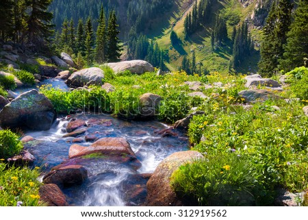 South Fork of Boulder Creek on a sunny summer day with yellow wildflowers in full bloom - stock photo