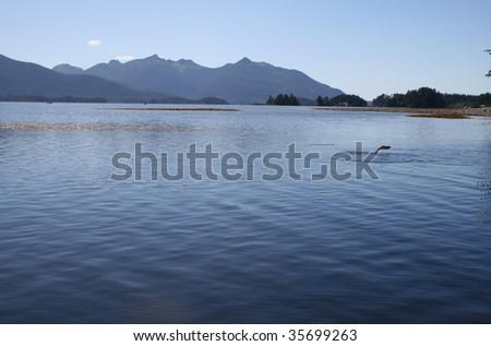 Southeast Alaskan landscape with sockeye salmon jumping out of the water - stock photo