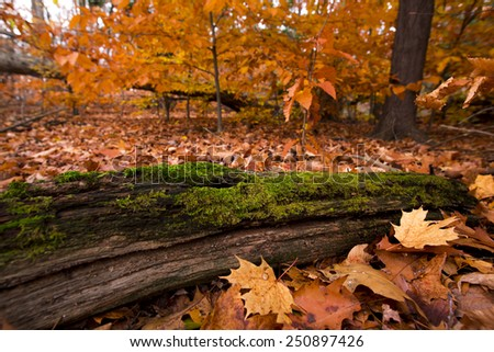Southern Ontario autumn scene with enhancing filter. - stock photo