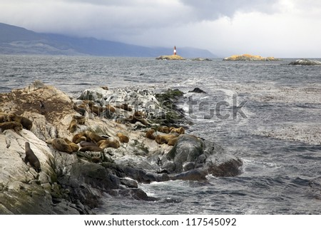 Southern Sea lions & Cormorants resting on the Islands of Tierra Del Fuego with Les Eclaireurs Lighthouse in the background, Ushuaia, Argentina - stock photo