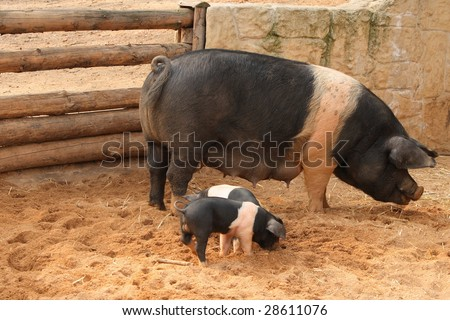 Sow with two piglets - stock photo