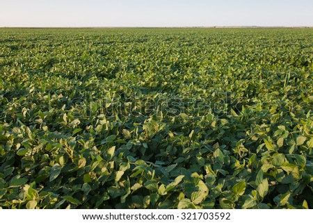 soy fields - stock photo