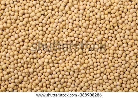 Soybean background - stock photo