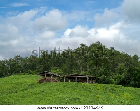 soybean field ,sky,clouds,hut and mountain - stock photo