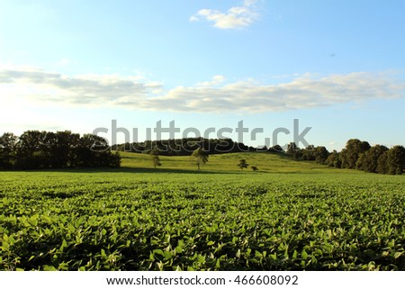 Soybean fields in the midwest