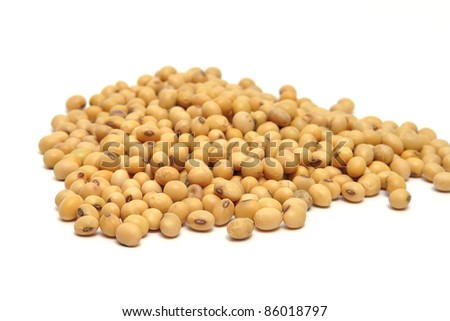 soybean in isolated on white background - stock photo