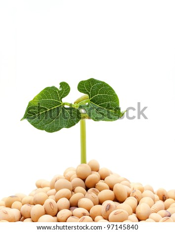 Soybean sprout isolated - stock photo