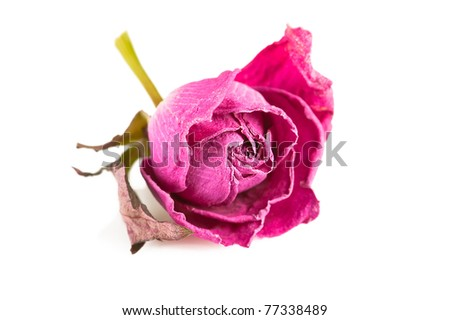 Spa background. Pink rose and herbs on white - stock photo