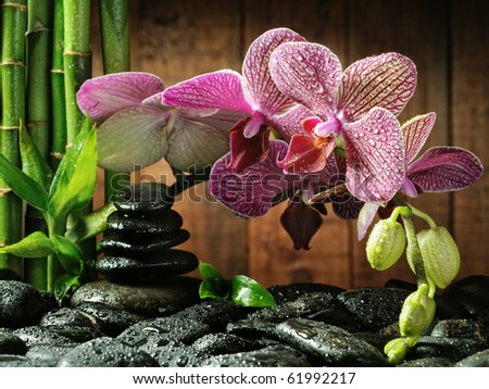 spa concept bamboo grove, pink orchid and black zen stones on the wooden background ,focus on the orchid - stock photo