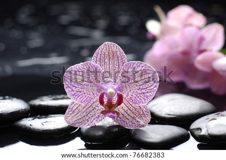 Spa Concept-beautiful orchid with zen stones - stock photo