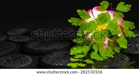 spa concept of green branch Adiantum fern, plumeria flower with drops on zen basalt stones in ripple reflection water, closeup - stock photo