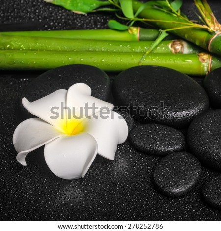 spa concept of zen basalt stones, white flower frangipani and natural bamboo with drops, closeup  - stock photo