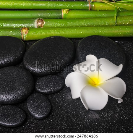 spa concept of zen basalt stones, white flower plumeria and natural bamboo with dew, closeup  - stock photo