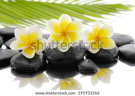 spa concept with zen stones and Frangipani and palm leaf - stock photo