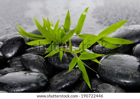 spa concept zen basalt stones with bamboo leaf - stock photo