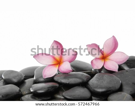 Spa concept- zen stones and two pink frangipani flowers