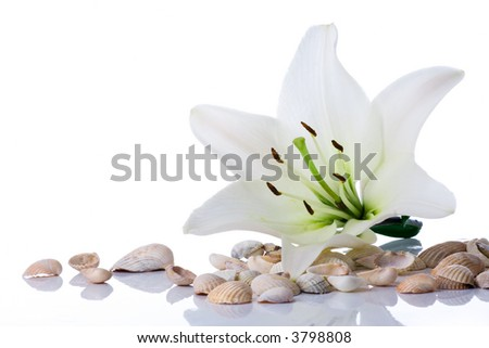 spa flower  towel sea shell on white - stock photo