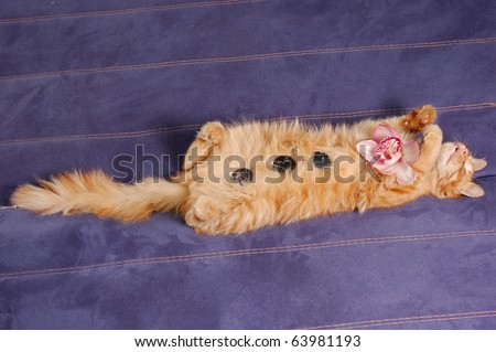spa kitten sleeps with flower and stones on sofa