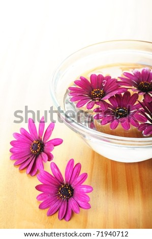 spa or zen flower concept with copyspace - stock photo