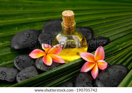 Spa set with frangipani,spa oil ,black stones on wet palm leaf  - stock photo