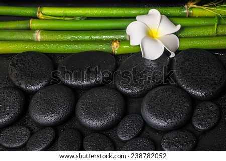 spa setting of zen basalt stones, white flower frangipani and natural bamboo with drops  - stock photo